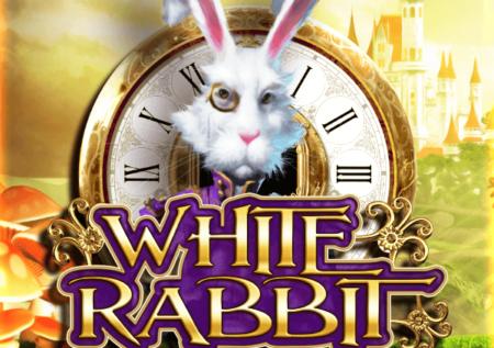 White Rabbit Online Gratis